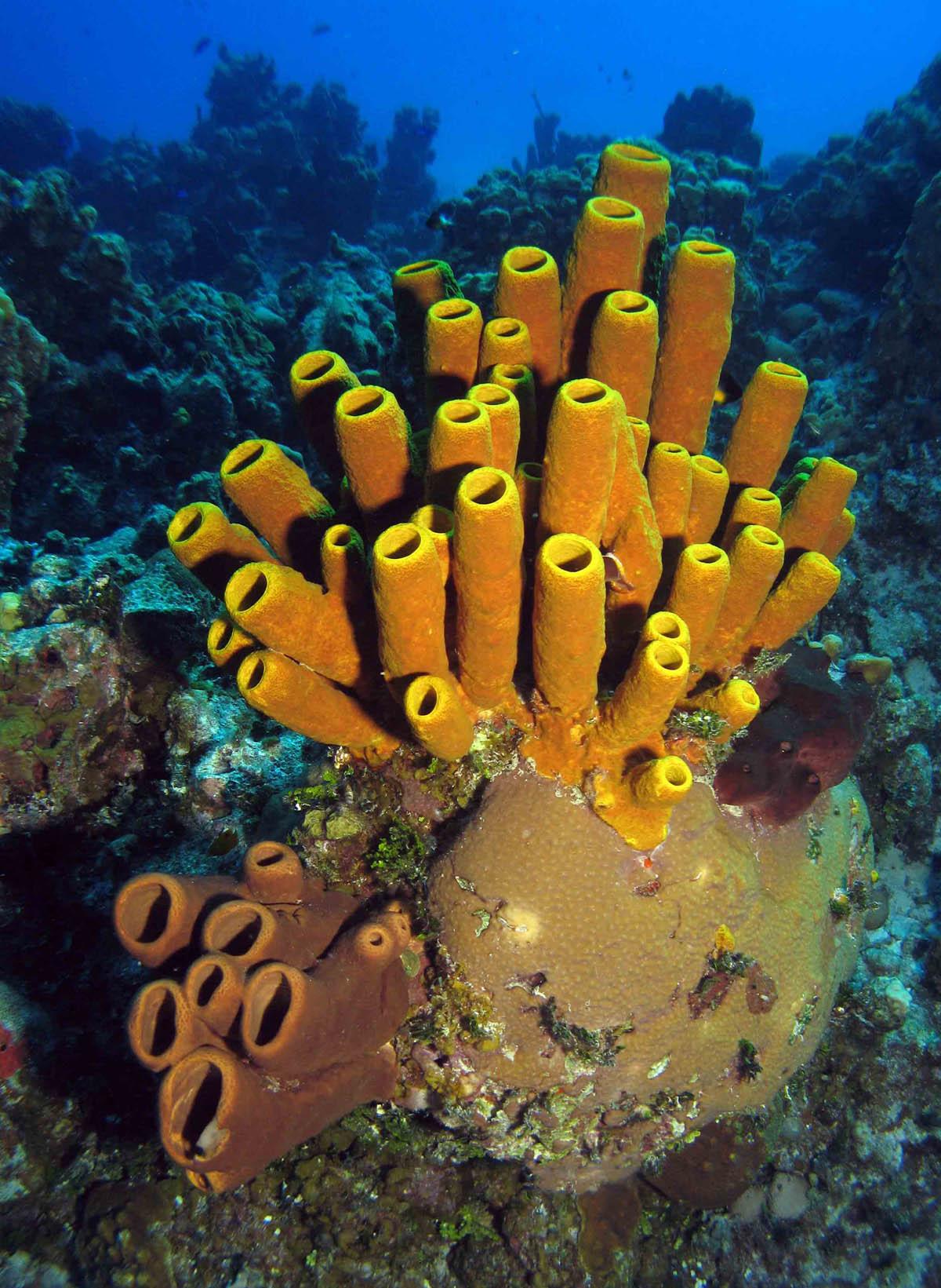 the sponge guide